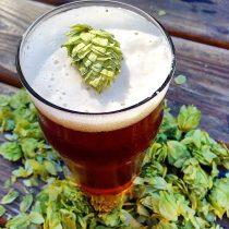 fresh hop beer